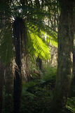 Fern Tree Royalty Free Stock Photos