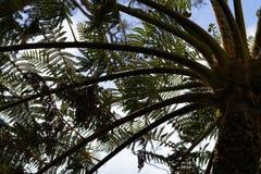 03 fern tree 库存照片