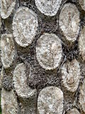 Fern Tree d'argento fotografia stock