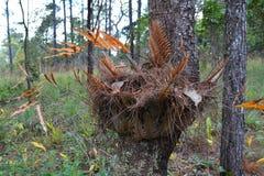 Fern on tree Royalty Free Stock Photos