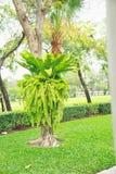 Fern on tree Royalty Free Stock Photo