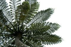 Fern tree leaves Stock Images