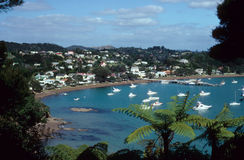 Fern tree over bay Stock Images