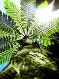 Fern Tree In The Sky Royalty Free Stock Photos