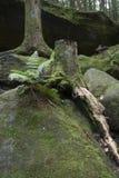 Fern and tree stump stock photos