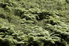 Fern trees Stock Photography