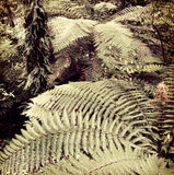 Fern trees. In tropical jungle forest Royalty Free Stock Photos