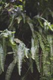 Fern in tropical forest. Stock Image