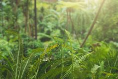 Fern in tropical forest. Stock Images