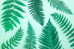 Fern Tropical Leaf Bloemen de Zomermanier minimaal stock foto's