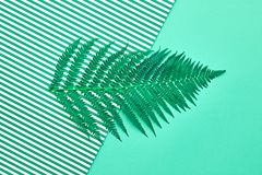 Fern Tropical Leaf Blumensommer-Mode minimal Stockbilder