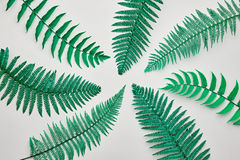 Fern Tropical Leaf Blumensommer-Mode minimal lizenzfreie stockfotos