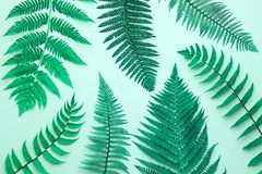 Fern Tropical Leaf Mode florale d'été minimal photos stock