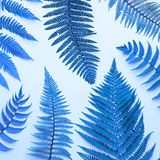 Fern Tropical Leaf Surrealer Natur-Blau-Hintergrund stockfoto