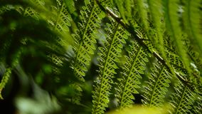 Fern twig backlighted by the sun on dark background 4K. Fern twig backlighted by the sun in subtropical woods of Caucasus stock video footage