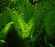 Fern under a sun stock images
