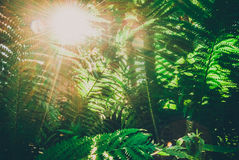 Fern under the sun. A fern is a member of a group of vascular plants that reproduce via spores and have neither seeds nor flowers Stock Images