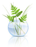 Fern In Vase. Green Grass and Fern In Round Glass Vase Over White Background Royalty Free Stock Photos