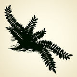Fern. Vector drawing Stock Photos