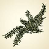 Fern. Vector drawing Royalty Free Stock Photo