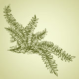 Fern. Vector drawing Royalty Free Stock Photos