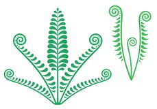Fern. Vector illustration (EPS 10&#x29 Royalty Free Stock Photo