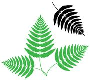 Fern. Vector illustration (EPS 10 Stock Photo