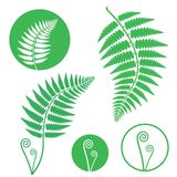 Fern. Vector illustration (EPS 10 Royalty Free Stock Image