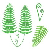 Fern. Vector illustration (EPS 10 Royalty Free Stock Images