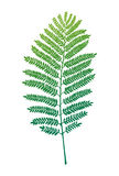 Fern vector leaf. Fern leaf silhouette. Vector illustration. Decor element Stock Image