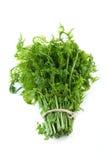 Fern vegetal imagem de stock