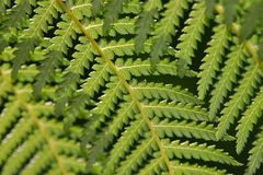 Fern Viens Stock Photo