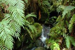 fern wąwozu Zdjęcie Royalty Free