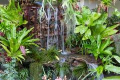 Fern was born near the waterfall. Royalty Free Stock Photos