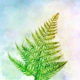 Fern Watercolor con fondo multicolore Fotografia Stock