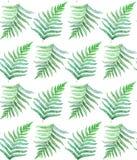 Fern watercolor seamless pattern stock photos
