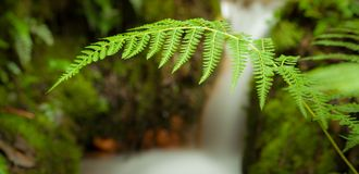 Fern in the waterfall royalty free stock photos