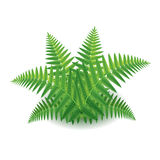 Fern  on white vector Stock Photos