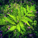 Fern and wildflowers Royalty Free Stock Photos