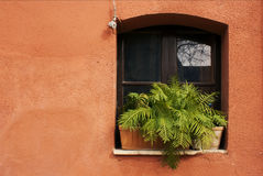Fern on the window  on the red wall. Fern on the window in the sun on the red wall Stock Photo