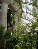 Fern in the Winter Garden, part of the Royal Greenhouses at Laeken, Brussels, Belgium.