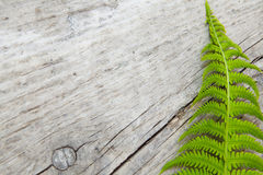 Fern on wood Royalty Free Stock Photography