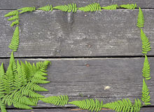 Fern on wooden background Stock Photo