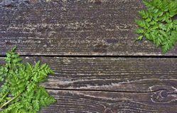 Fern on wooden background Royalty Free Stock Image