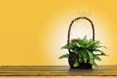 Fern in wooden basket, still life shot Stock Photography