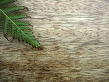 Fern on a wooden table. Fern leave on a wooden brown table Royalty Free Stock Images