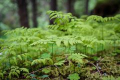 Fern in the woods micro royalty free stock photo