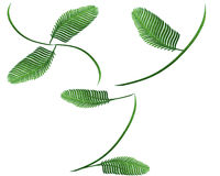 Fern words Royalty Free Stock Photos