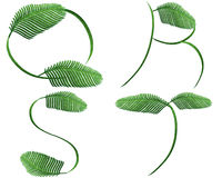 Fern words Royalty Free Stock Photography