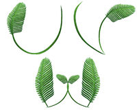 Fern words. Collection of fern words.clipping path included Stock Photography